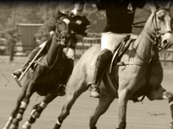 Polo Club Luxembourg news